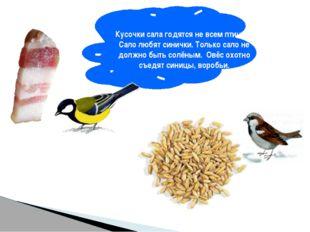 Кусочки сала годятся не всем птицам. Сало любят синички. Только сало не долж