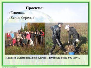 Проекты: «Елочка» «Белая береза» Нашими силами посажено ёлочек-1200 штук, бе