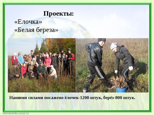 Проекты: «Елочка» «Белая береза» Нашими силами посажено ёлочек-1200 штук, бе...