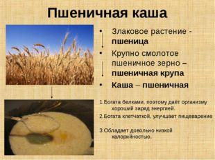 Пшеничная каша Злаковое растение - пшеница Крупно смолотое пшеничное зерно –