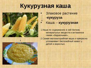 Кукурузная каша Злаковое растение -кукуруза Каша – кукурузная 1.Каша по содер