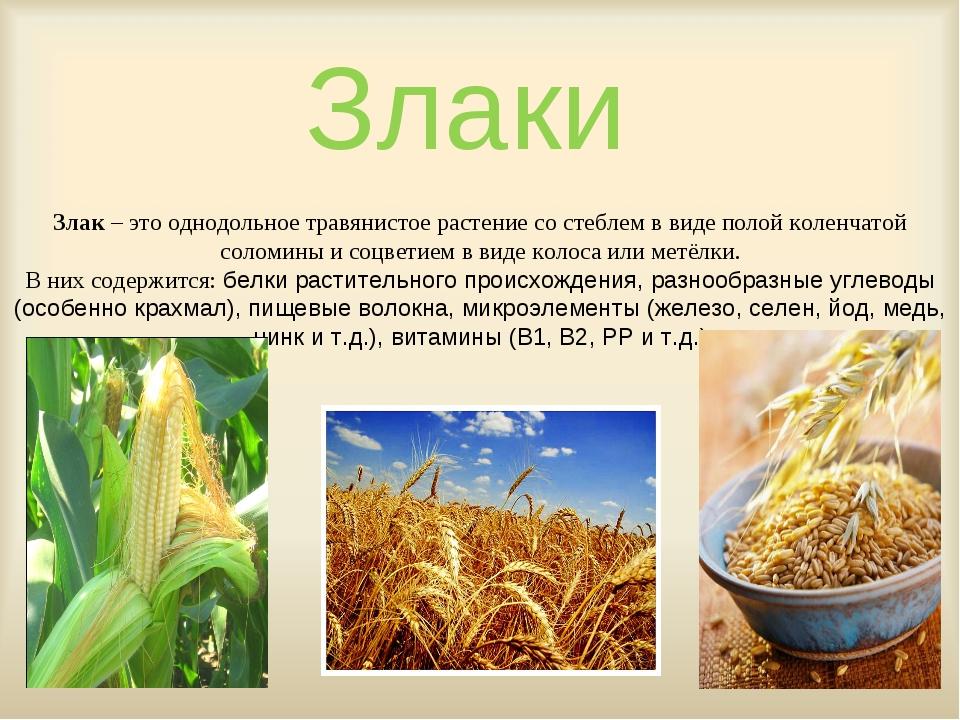 Злаки Злак – это однодольное травянистое растение со стеблем в виде полой кол...