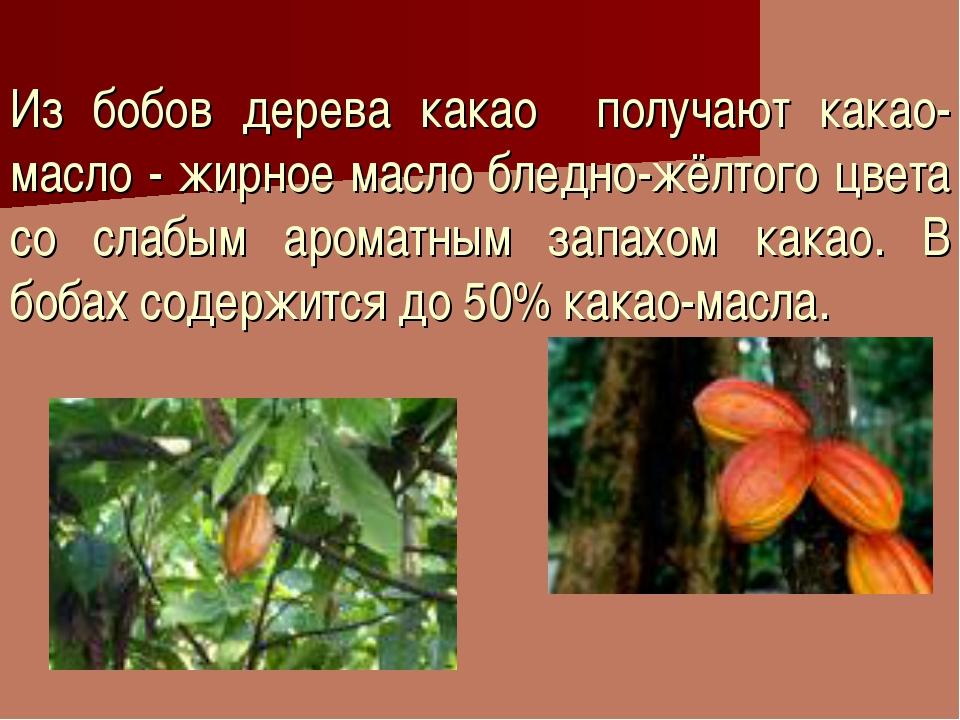 Из бобов дерева какао получают какао-масло - жирное масло бледно-жёлтого цвет...