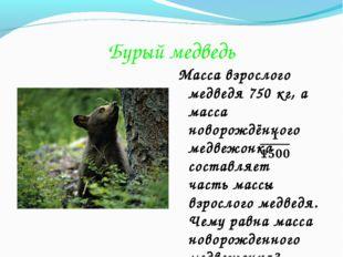 Бурый медведь Масса взрослого медведя 750 кг, а масса новорождённого медвежон