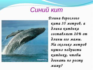 Синий кит Длина взрослого кита 35 метров, а длина китёнка составляет 20% от д