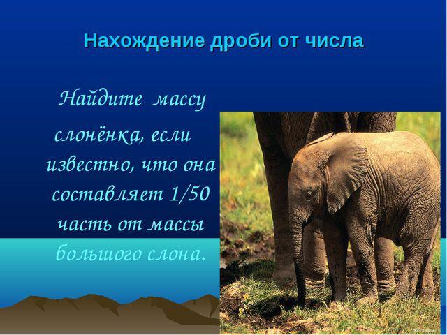 Нахождение дроби от числа Найдите массу слонёнка, если известно, что она сост...