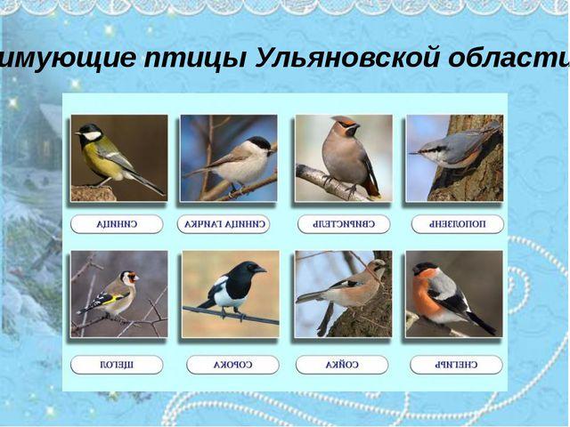 Зимующие птицы Ульяновской области