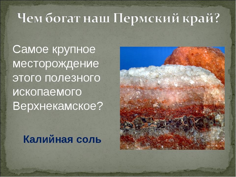 Самое крупное месторождение этого полезного ископаемого Верхнекамское? Калийн...