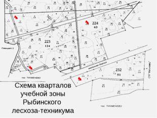223 224 232 Схема кварталов учебной зоны Рыбинского лесхоза-техникума