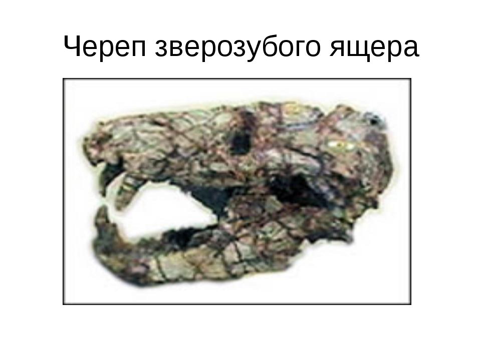 Череп зверозубого ящера
