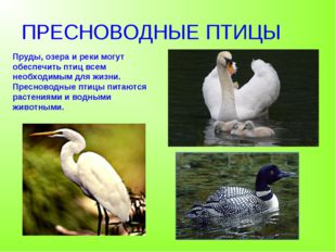 ПРЕСНОВОДНЫЕ ПТИЦЫ Пруды, озера и реки могут обеспечить птиц всем необходимым