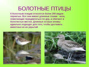 БОЛОТНЫЕ ПТИЦЫ К болотным птицам относятся более 200 видов пернатых. Все они