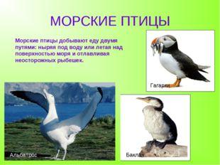 МОРСКИЕ ПТИЦЫ Баклан Альбатрос Гагарки Морские птицы добывают еду двумя путям