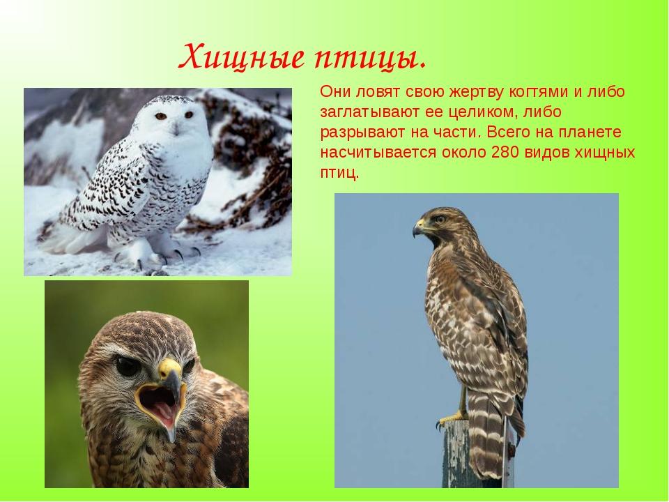 Хищные птицы. Они ловят свою жертву когтями и либо заглатывают ее целиком, ли...