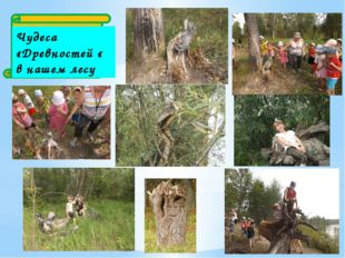 Чудеса «Древностей « в нашем лесу