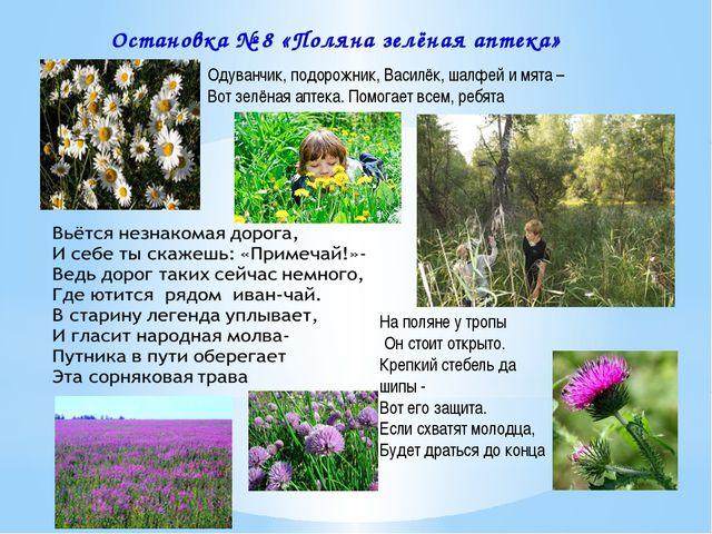 Одуванчик, подорожник, Василёк, шалфей и мята – Вот зелёная аптека. Помогает...