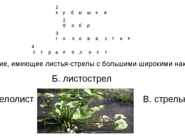 4. Растение, имеющее листья-стрелы с большими широкими наконечниками. А. стре...
