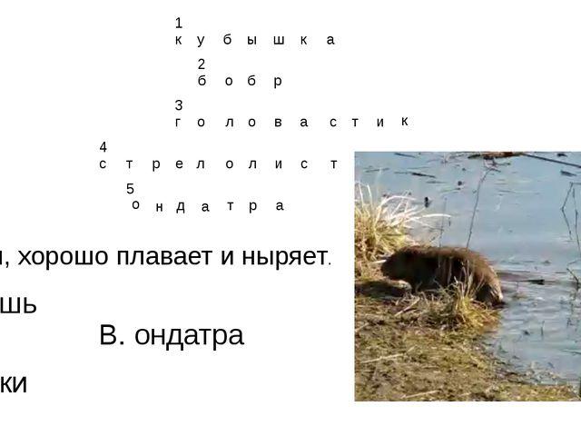 5. Грызун, хорошо плавает и ныряет. А. мышь Б. раки В. ондатра о н д а т р а...