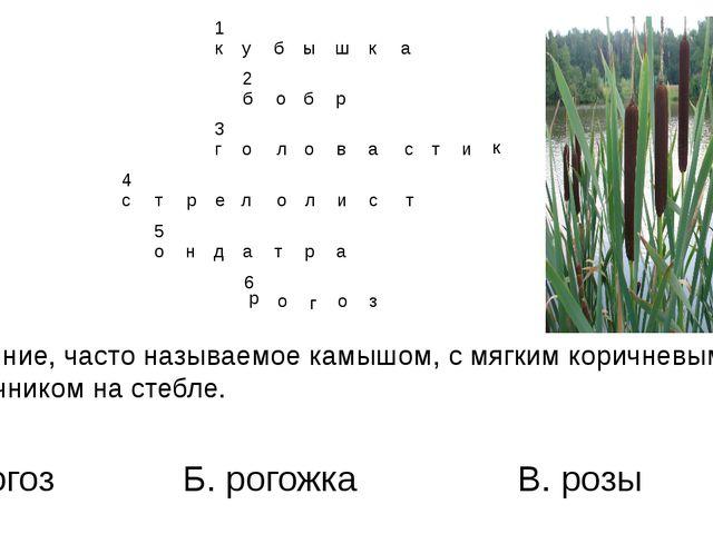 6. Растение, часто называемое камышом, с мягким коричневым наконечником на ст...