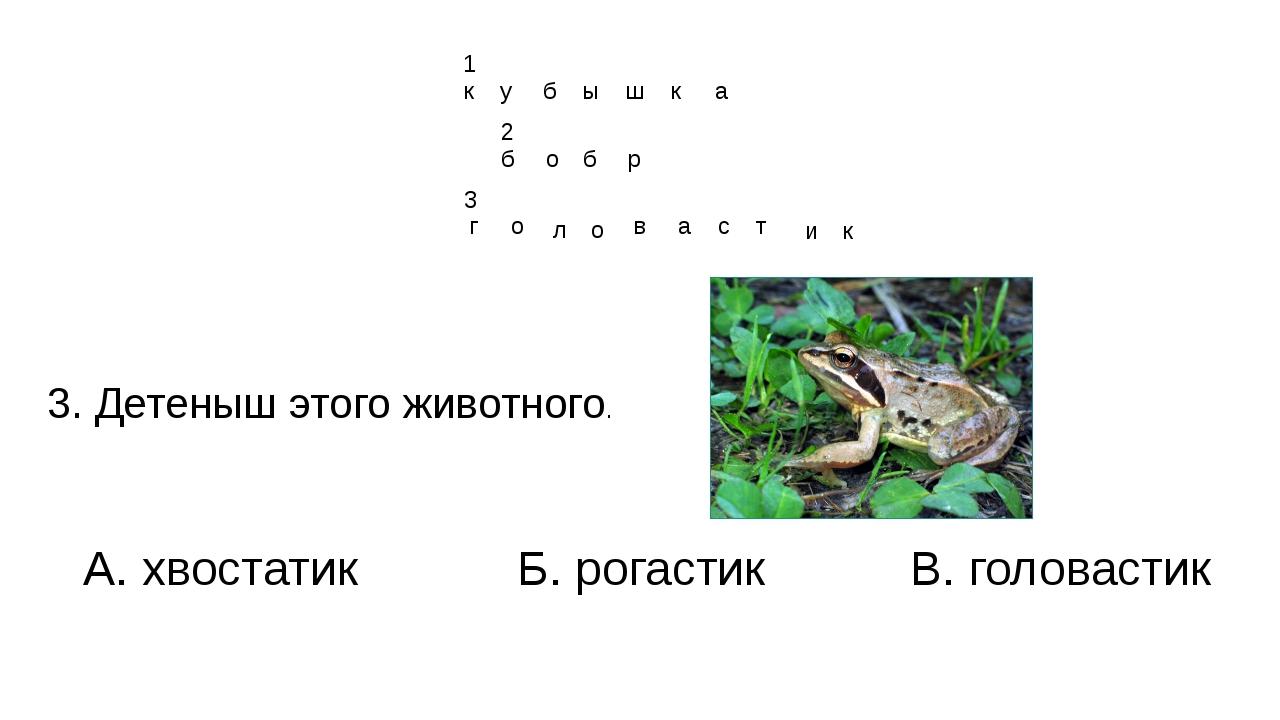 3. Детеныш этого животного. А. хвостатик Б. рогастик В. головастик г о л о в...