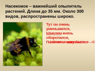 Насекомое – важнейший опылитель растений. Длина до 35 мм. Около 300 видов, ра