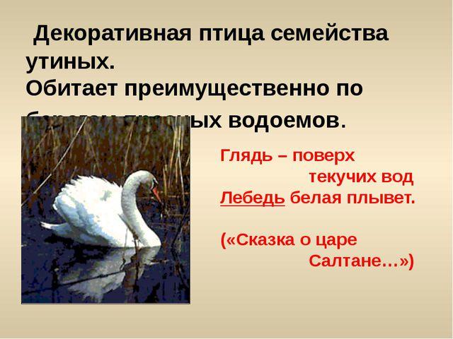 Декоративная птица семейства утиных. Обитает преимущественно по берегам прес...