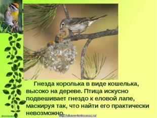 Гнезда королька в виде кошелька, высоко на дереве. Птица искусно подвешивает