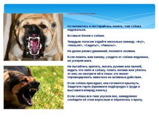 Что делать, если на вас напала собака? Остановитесь и постарайтесь понять, ч