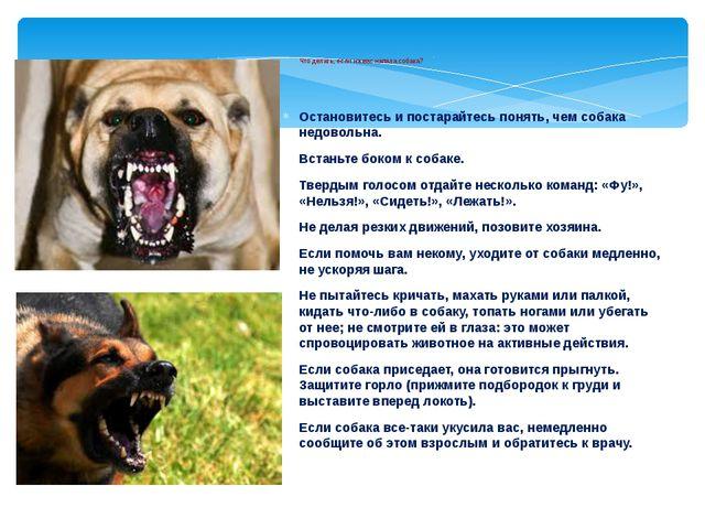 Что делать, если на вас напала собака? Остановитесь и постарайтесь понять, ч...
