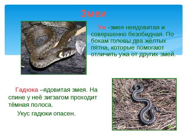 Уж -змея неядовитая и совершенно безобидная. По бокам головы два жёлтых пятн...