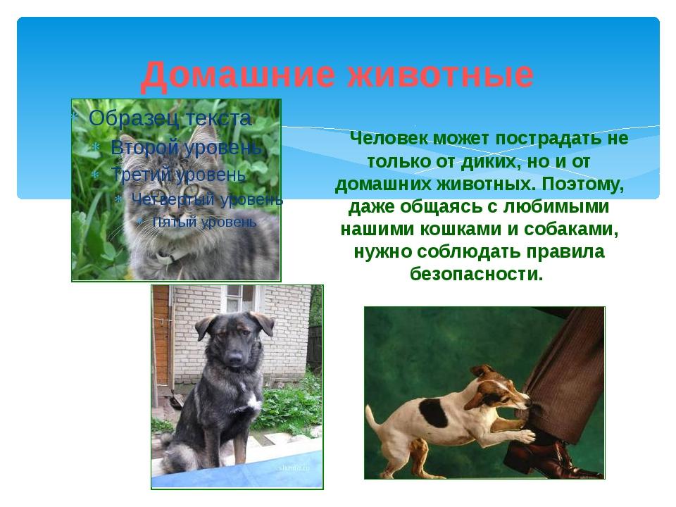 Домашние животные Человек может пострадать не только от диких, но и от домашн...