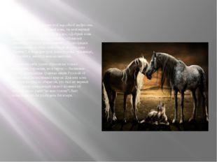 Находим слова вславянской народной мудрости, которая гласит: «Конь, мой кон