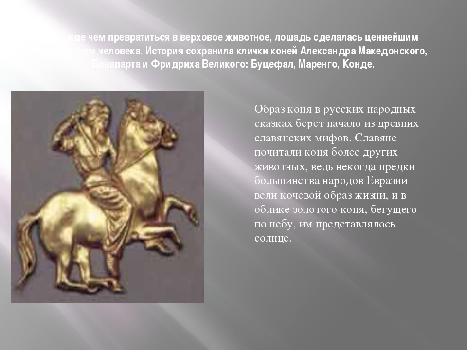 Прежде чем превратиться в верховое животное, лошадь сделалась ценнейшим дост...