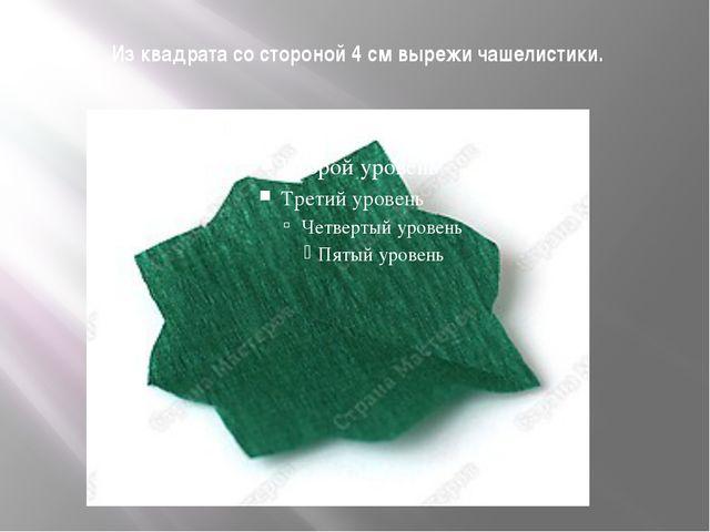Из квадрата со стороной 4 см вырежи чашелистики.