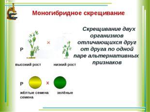 Моногибридное скрещивание Скрещивание двух организмов отличающихся друг от др