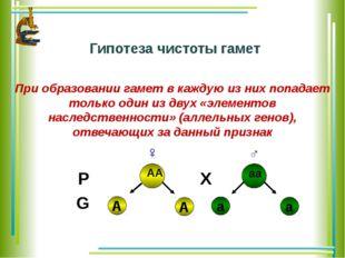 Гипотеза чистоты гамет При образовании гамет в каждую из них попадает только