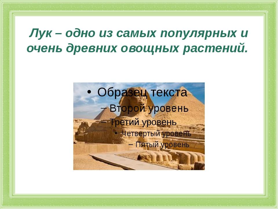 Лук – одно из самых популярных и очень древних овощных растений.