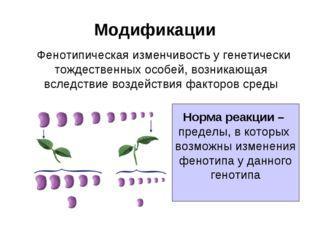 Модификации Фенотипическая изменчивость у генетически тождественных особей, в