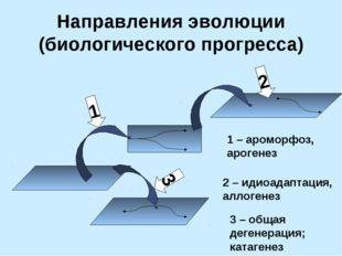 Направления эволюции (биологического прогресса) 1 3 2 1 – ароморфоз, арогенез