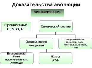 Доказательства эволюции Биохимические Органогены: C, N, O, H