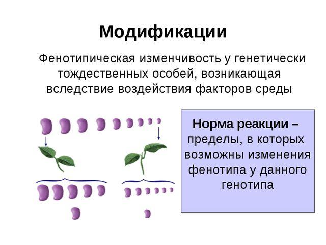 Модификации Фенотипическая изменчивость у генетически тождественных особей, в...