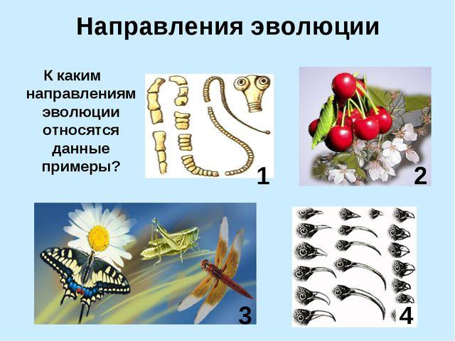 Направления эволюции К каким направлениям эволюции относятся данные примеры?...