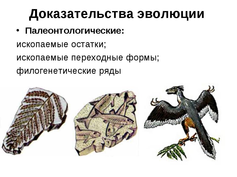 Доказательства эволюции Палеонтологические: ископаемые остатки; ископаемые пе...