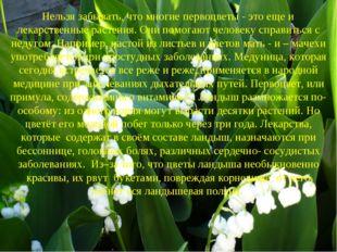 Нельзя забывать, что многие первоцветы - это еще и лекарственные растения. О