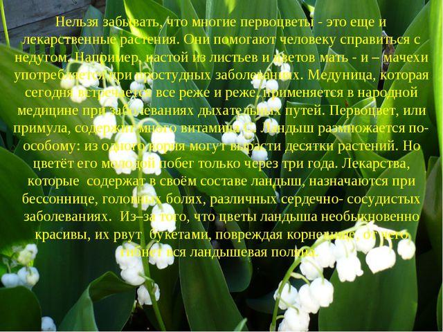 Нельзя забывать, что многие первоцветы - это еще и лекарственные растения. О...
