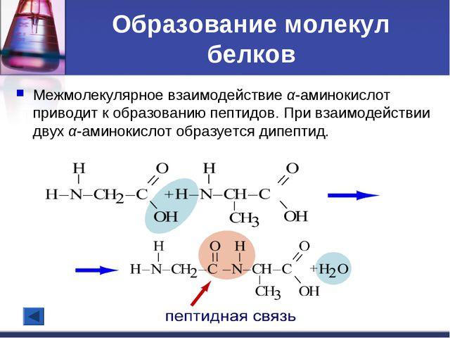 Образование молекул белков Межмолекулярное взаимодействие α-аминокислот приво...