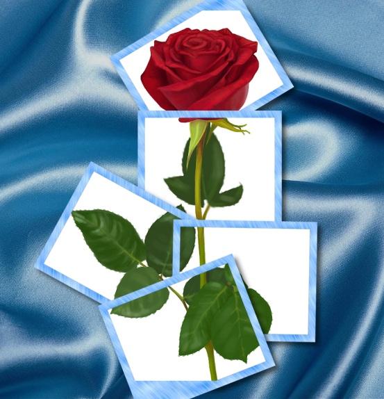 роза111.jpg