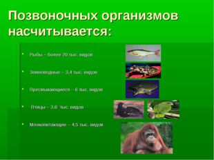 Позвоночных организмов насчитывается: Рыбы – более 20 тыс. видов Земноводные