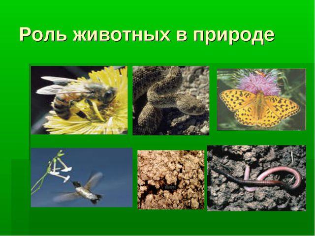 Роль животных в природе