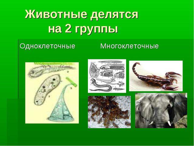 Животные делятся на 2 группы